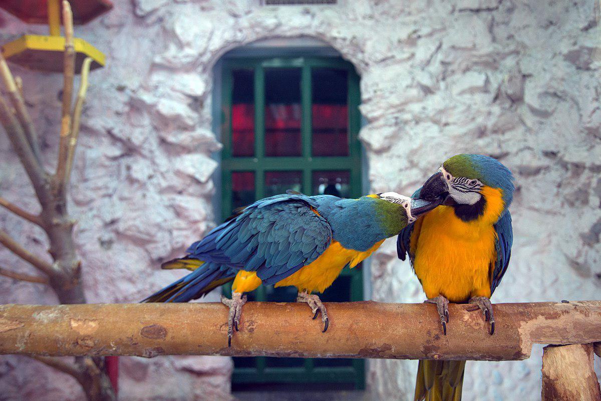 حديقة الطيور في اصفهان