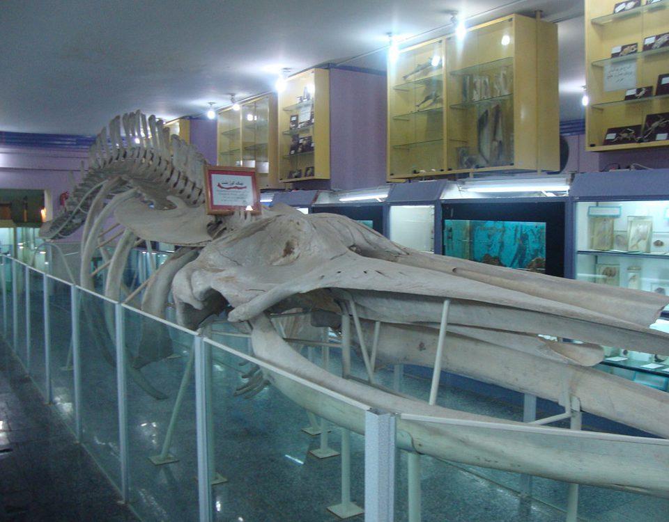 متحف التاريخ الطبيعي في همدان