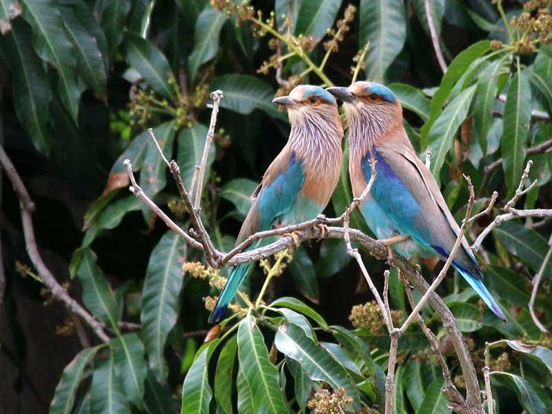 إيران لديها أكثر من 500 نوع من الطيور