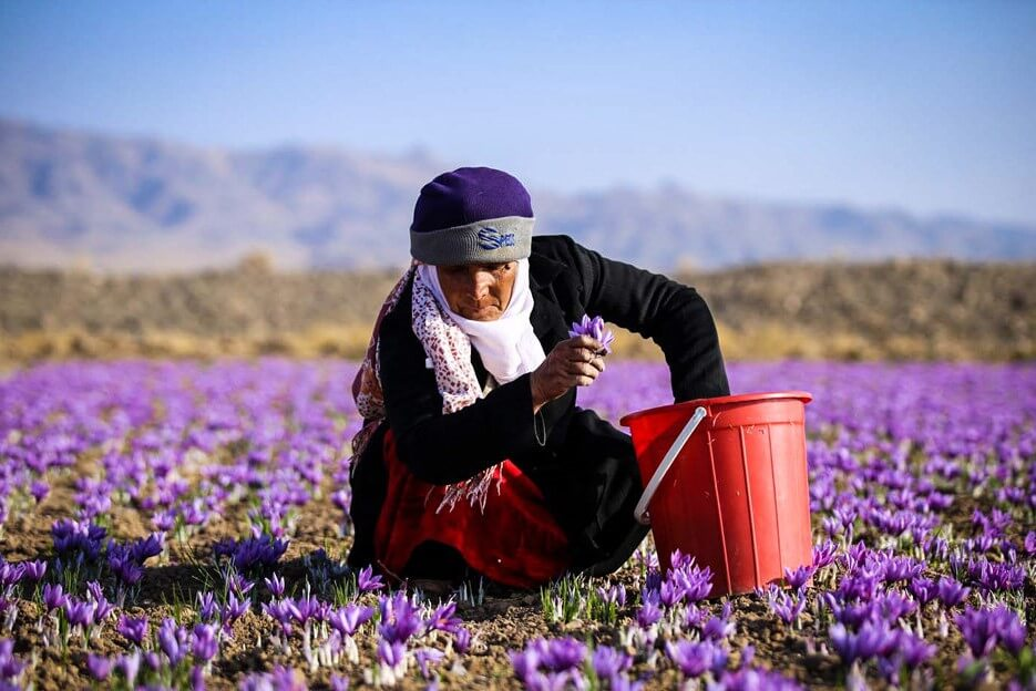 زعفران إيران