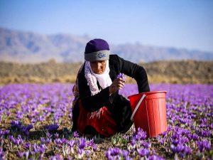 الزعفران الايراني الاصلي