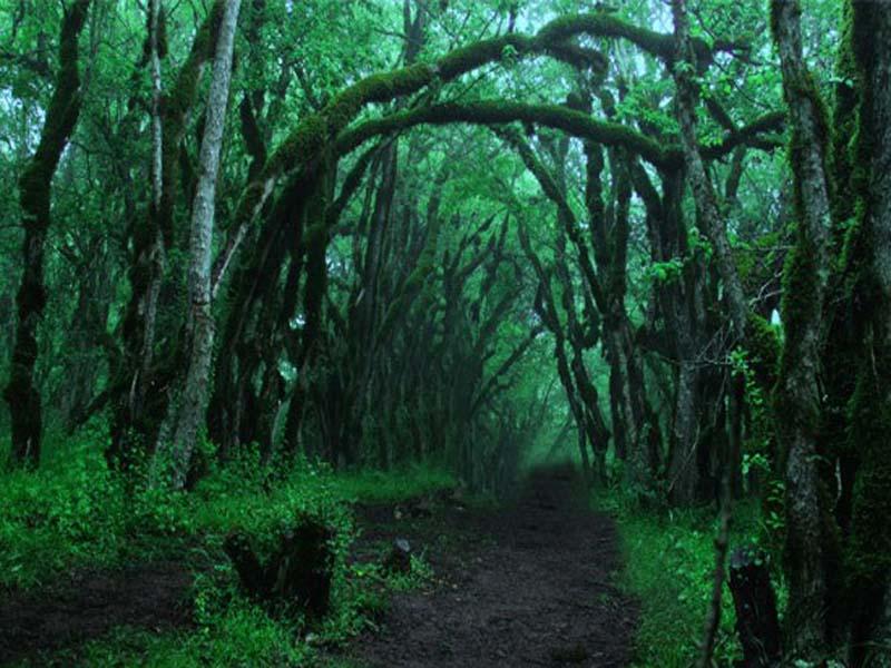 تعرف على أجمل غابات إيران - غابة -56أليمستان