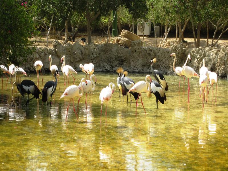 جزيرة كيش السياحة في إيران الجزرالإيرانية