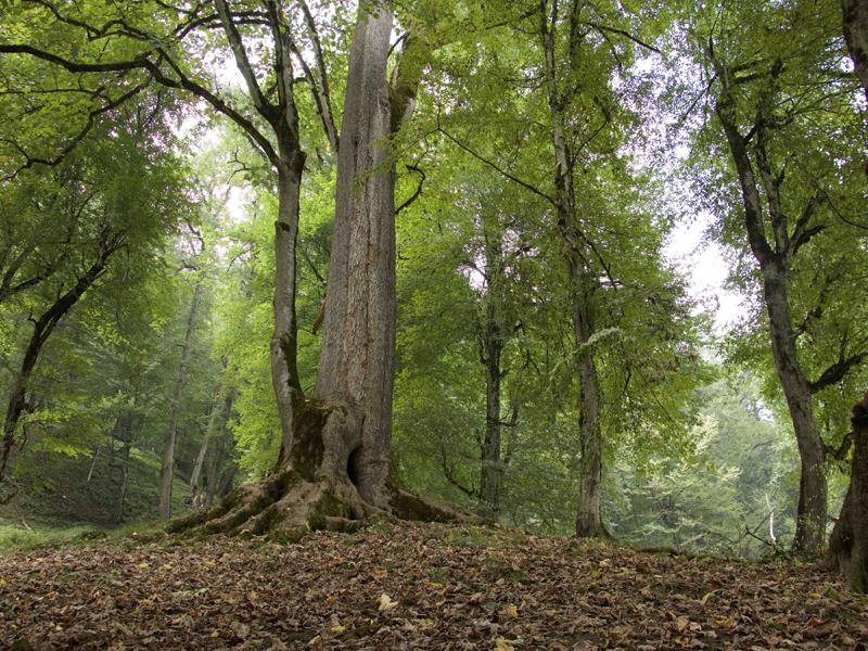 غابات دالخاني