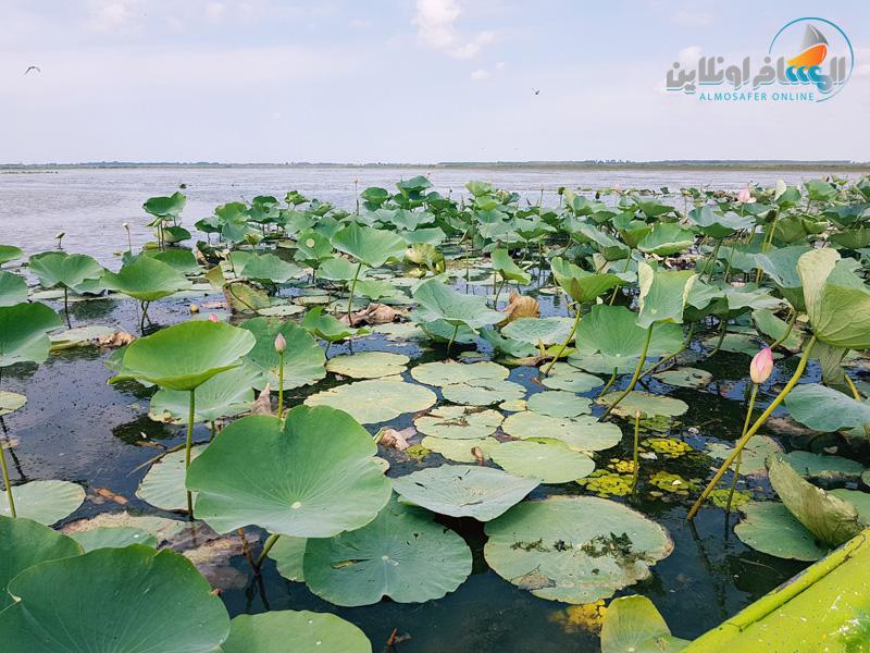بحيرة أنزلي