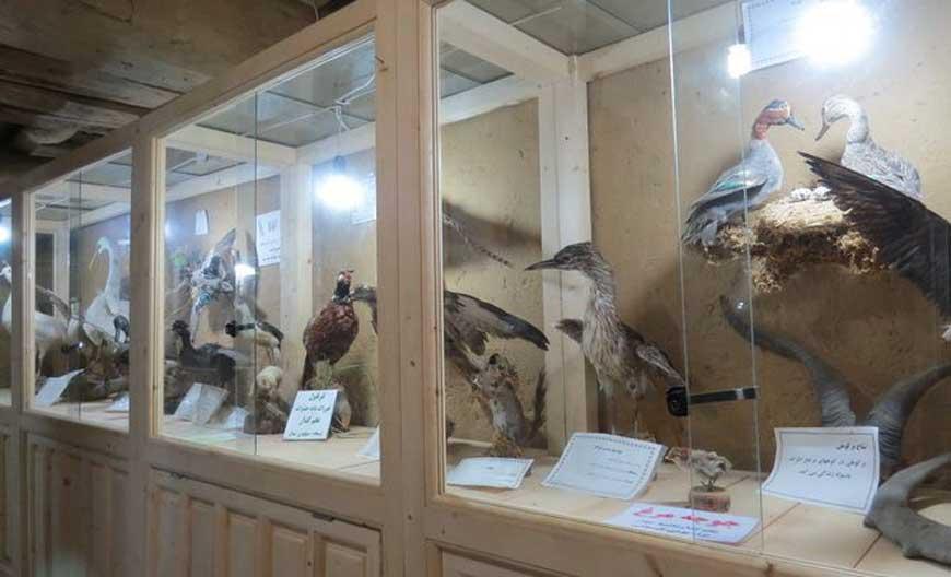متحف الحياة البرية
