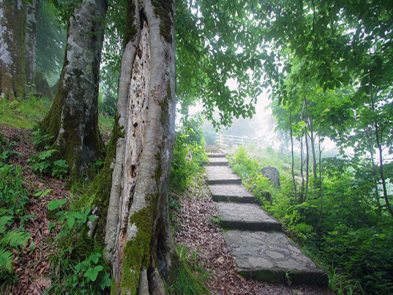 حديقة غابة فين في جالوس (تشالوس)
