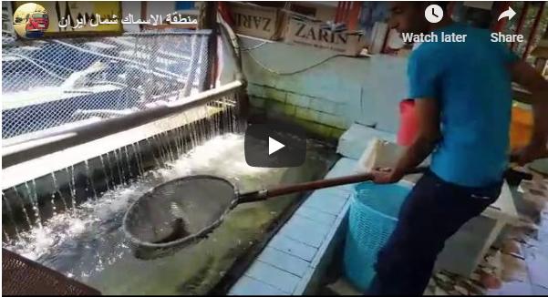 صيد الأسماك في شمال إيران