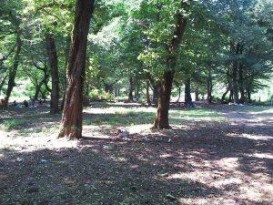 حديقة خرما الغابية في مدينة لنغرود شمال إيران