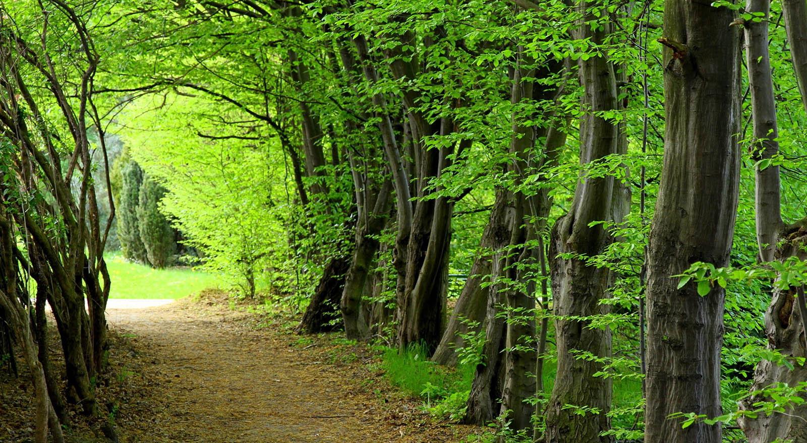 حديقة سي سنكان الغابية في شمال إيران