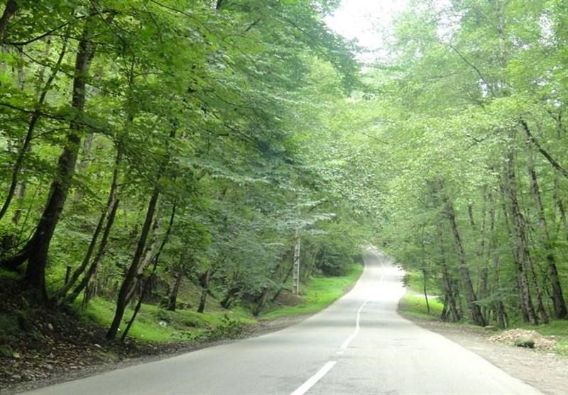 حديقة غابة رويان في شمال إيران