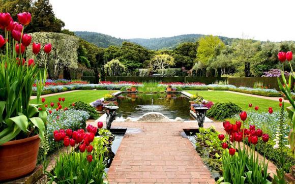 حديقة صفة