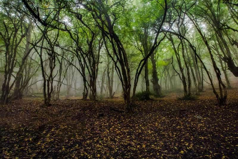 غابة اليمستان