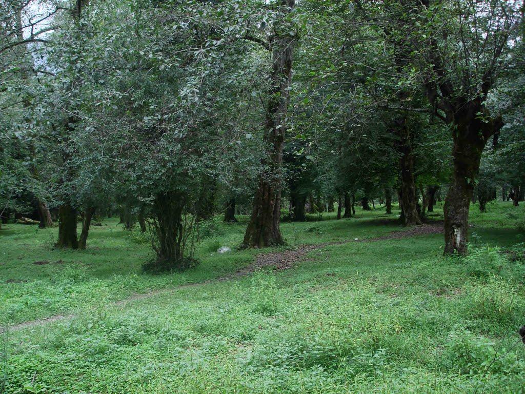 غابة بندبي في شمال إيران