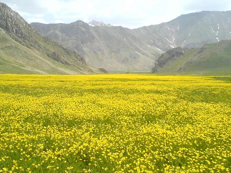 كهف الزهرة الصفراء
