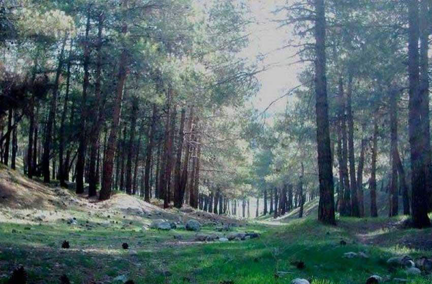 حديقة غابة لويزان