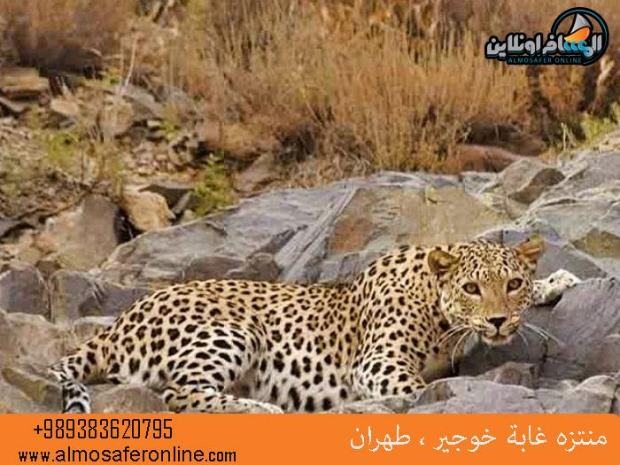منتزه غابة خوجير ، طهران
